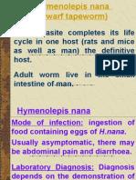 H. nana