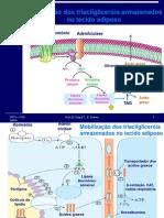 Material Catabolismo DosAcidos Graxosppt