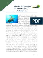 Conservación de Las Tortugas Marinas (Articulo)