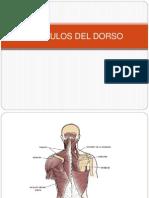 52186103-20-Musculos-del-Dorso-Prof-Pedro-Bolivar.pptx