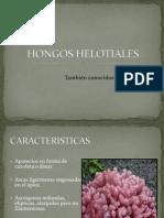 HONGOS HELOTIALES