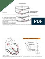 Electrocardiografia Dr Esaul Campos