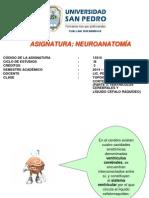 Clase 4 Topografía de La Corteza Cerebral (Parte 3)