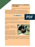 Especies Protegidad en Cantabria