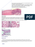 Células polimorfas