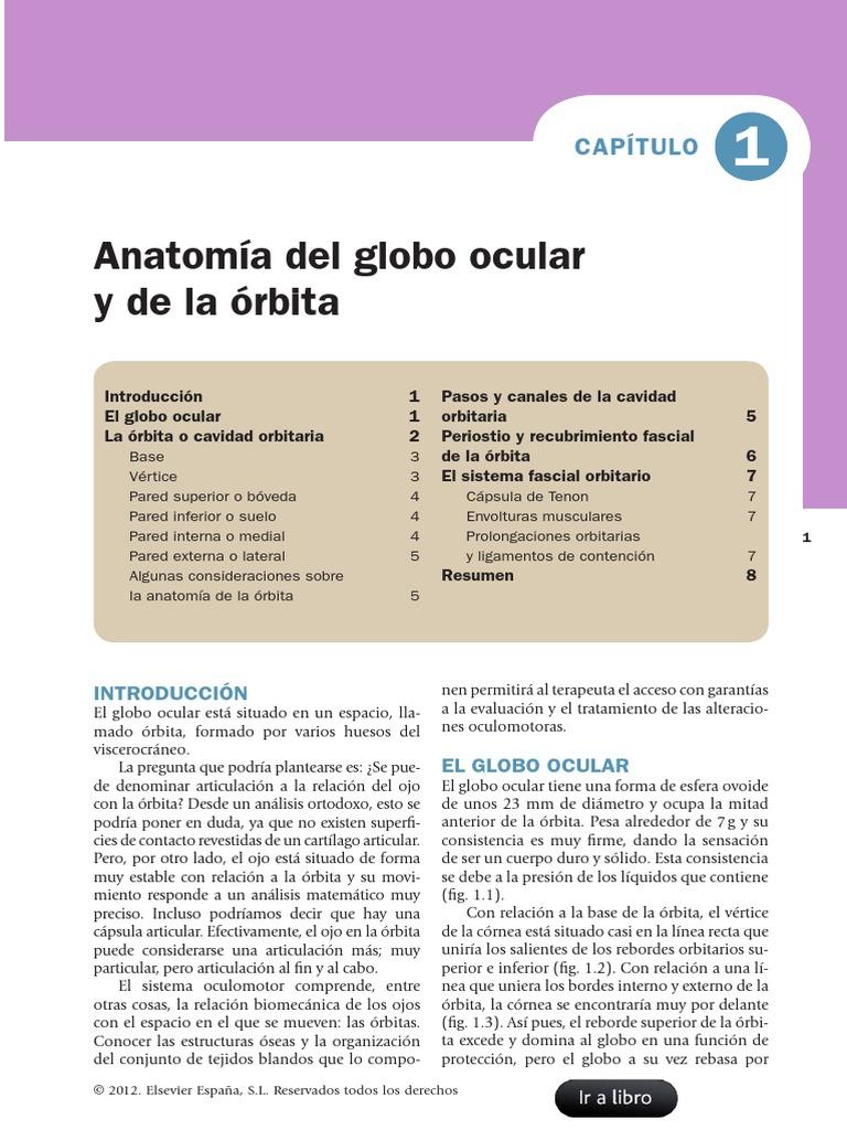 Anatomia Ocular y Orbita