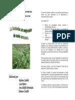 Sesbania rostrata -agronomia