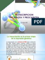 EXPOSICION BIOLO TRANSCRIPCION