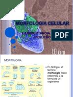 3. Morfologia Celular (1)