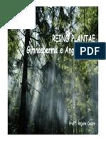 3ª Série EM Aula 1 - Reino Plantae - Gimnospermas e Angiospermas