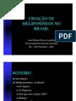 criacao_meliponineos