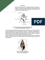 Gasterópodos