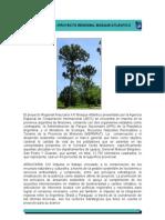 ARAUCARIA XXI-Proyecto Regional Bosque Atlántico