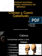Diapositivas Craneo