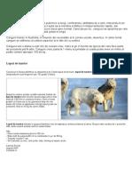 Referat_animale_salbatice