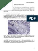 Estruturas_Primarias_paciullo
