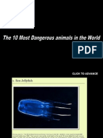 The 10 most dangerous animals