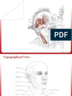 5-Head, Neck & Face