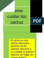Como Cuidar Los Cactus