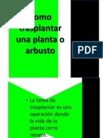 Como Trasplantar Una Planta o Arbusto