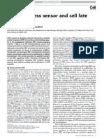 IRE1 - ER Stress Sensor and Cell Fate Executor