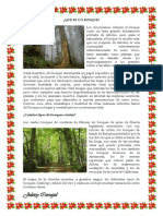Qué Es Un Bosque