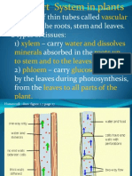 Transport System in Plants