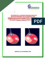 20061127162055_Interaccion Microorganismo Antracnosis Tomate de Arbol