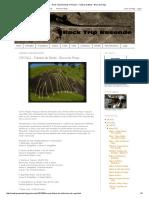 Rock Trip Resende_ CROQUI - Falésia do Bode - Boca do Rego.pdf