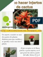 Como Hacer Injertos de Cactus Decoracion de Jardines