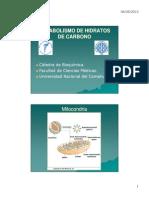 Cadena Respiratoria y Fosforilación Oxidativa