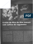 Frutas2014_Produção_Cogumelos