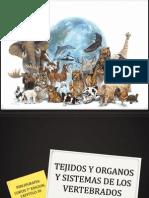 Tejidos y Organos de Los Vertebrados