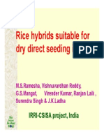 Ramesha Mugalodi_Rice Hybrids Suitable for Dry Direct Seeding in India