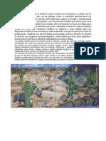 Prima Andrea La Cadena Alimenticia en El Desierto