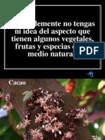 Vegetales Frutas y Especias-1