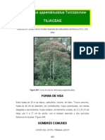 Heliocarpus appendiculatus