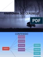 Anatomia Del Cerebelo