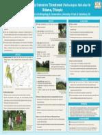 Sacred Sites Help Conserve Threatened Podocarpus falcatus in Sidama, Ethiopia