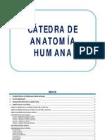 1er Año Medicina 2013-Anatomia Humana