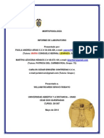 Informe Laboratorio Morfofisiologia (6)