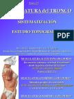 Tema 2.2-Musculatura Del Tronco