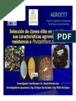 Selección de Clones Élites en Relación a Sus Caracteristicas Agronómicas y Resistencia a P. Palmivora