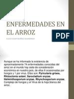 ENFERMEDADES EN EL ARROZ.pptx