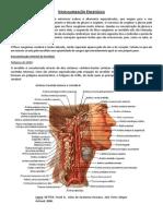 Vascularização encefálica