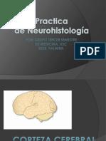 Atlas de Neurohistologia