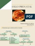 DESARROLLO_PRENATAL2