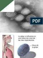 Gripe a h1n1