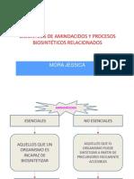 Biosintesis de Aminoacidos y Procesos Biosintéticos Relacionados