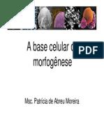 Base Celular Da Morfogênese